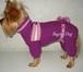 Foto в Собаки и щенки Одежда для собак Предлагаю недорогую вязаную на спицах одежду в Москве 0