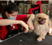 Фотография в Домашние животные Разное Приглашаем всех желающих научиться стричь в Москве 0