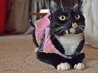 Фото в Кошки и котята Продажа кошек и котят Красавица черепахового окраса была спасена в Мурманске 0