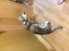 Смотреть изображение  Отдам пса Марти в добрые руки! 39796597 в Мурманске