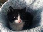 Фото в   Пропал котёнок 21 мая, с. Панфилово в конце в Муроме 0