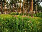 Изображение в   Продам участок 24, 5 сотки с лесными деревьями в Лобне 3000000