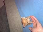 Котята Лапушки -бесплатно