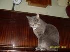 Увидеть изображение Потерялись животные Потерялся в районе Боровецких коттеджей кот 68311661 в Набережных Челнах