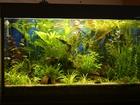Фотография в Рыбки (Аквариумистика) Растения Продаю излишки растений из своего аквариума: в Наро-Фоминске 30
