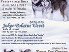 Фотография в Собаки и щенки Продажа собак, щенков Щенки Аляскинского маламута от Чемпионов в Нижнем Новгороде 40000