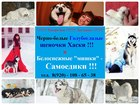 Изображение в Собаки и щенки Продажа собак, щенков Продам очень красивых щеночков хаски черно-белого в Нижнем Новгороде 123