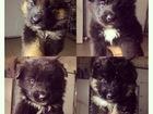 Фотография в Собаки и щенки Продажа собак, щенков Отдаём малышей в добрые руки. 2 мальчика в Нижнем Новгороде 0