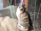 Смотреть фотографию Отдам даром - приму в дар отдам котят в добрые руки 45449197 в Нижнем Новгороде