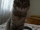 Скачать бесплатно фотографию  Ищу коту кошку для вязки, есть опыт) 68879143 в Нижнем Новгороде