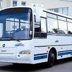 Аренда городского автобуса на 31 человек ПАЗ-4230 Аврора