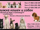 Скачать бесплатно foto Ветеринарные клиники Стрижка кошек и собак Выезд на дом в Москва и Московская область 37573651 в Ногинске