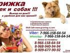 Свежее фото Разные услуги Стрижка кошек и собак вызов выезд на дом груминг животных 38755710 в Ногинске
