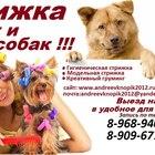 Стрижка кошек и собак (животных)выезд на дом