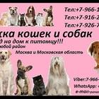Стрижка кошек и собак Выезд на дом в Москва и Московская область