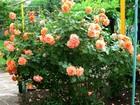 Просмотреть изображение  Срочно продаю дачу г, Новочеркасск 39858655 в Новочеркасске
