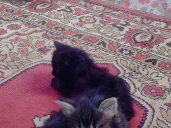 Скачать бесплатно foto Отдам даром Отдам в хорошие руки котят 33258728 в Новокузнецке