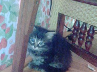 Скачать бесплатно изображение Отдам даром Отдам в хорошие руки котят 33258728 в Новокузнецке