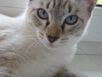 Уникальное foto Отдам даром - приму в дар Отдам котят 33272443 в Новокузнецке