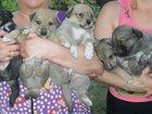 Фотография в Собаки и щенки Продажа собак, щенков Отдам желающим приобрести друга и сторожа. в Новороссийске 0