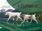 Фотография в Собаки и щенки Продажа собак, щенков 25. 09. 2015 в питомнике С Саянских гор в Новосибирске 0