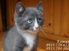 Изображение в Отдам даром - Приму в дар Отдам даром Хочется что бы и у этих кото-ребятишек была в Новосибирске 0
