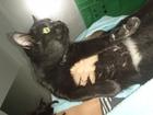 Фото в   Найденыш, кошечка молодая, чёрная с пятнышками в Новосибирске 0