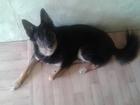 Изображение в Собаки и щенки Продажа собак, щенков Отдам в хорошие руки молодую симпатичную в Новосибирске 0
