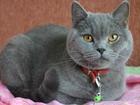 Фотография в Кошки и котята Продажа кошек и котят Котик привит, к туалету приучен, с когтеточкой в Новосибирске 6000