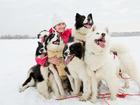 Изображение в Собаки и щенки Продажа собак, щенков Питомник Эль Флаум предлагает вашему вниманию в Новосибирске 15000