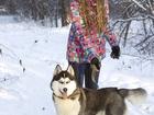 Новое фотографию Вязка собак вязка кобель сибирский хаски 2, 5 года, родословная, хорошие оценки на выставке 38712781 в Новосибирске