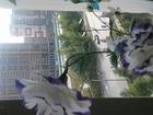 Смотреть фото  Продам или выращу для ВАС уникальные растения 76730547 в Новосибирске