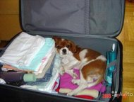 Няня для зверят (передержка/гостиница для животных) Обеспечу уход за вашим домаш