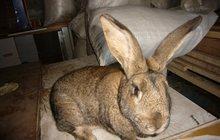 Продам кроликов с доставкой