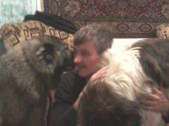 Скачать бесплатно фотографию Другие животные Щенки кавказской овчарки 32355597 в Новосибирске