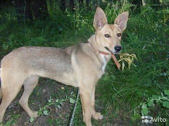 Смотреть фото Отдам даром Собаку в хорошие руки 32697217 в Новосибирске