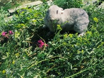Скачать бесплатно фото  Мясные кролики 36614325 в Новосибирске