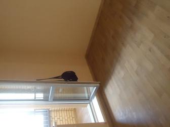 Просмотреть фотографию Ремонт, отделка бюджетный ремонт квартир 37606425 в Новосибирске