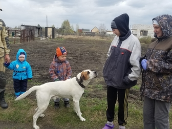 Смотреть фото Отдам даром - приму в дар Ищу хозяев для собаки компаньона 49264452 в Новосибирске