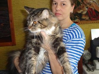 Мейн-кун фото в Новосибирске