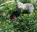 Фото в   Крестьянско-фермерское хозяйство реализует в Новосибирске 2500