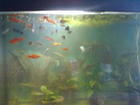Фото в Рыбки (Аквариумистика) Изготовление аквариумов Продам Аквариум на 500 литров, новый, заводское в Обнинске 15000