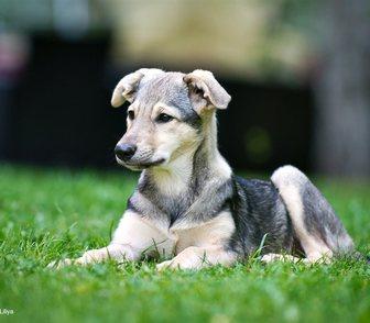 Изображение в Собаки и щенки Продажа собак, щенков Лиза ищет себе хозяев. Ей 3. 5 месяца. Девочка в Москве 100