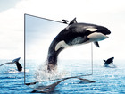 Смотреть изображение Телевизоры Куплю жк телевизор 37663836 в Омске