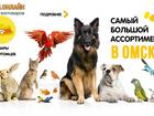 Просмотреть фото  Зоотовары в интернет-магазине для животных 62268956 в Омске