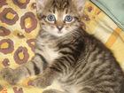 Увидеть фотографию Отдам даром - приму в дар отдам даром в добрые руки котёнка 67834032 в Омске