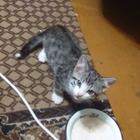 Если добрый ты душой, то котёночка пристрой, и не одного, а трёх