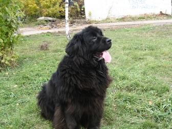 Смотреть фото Продажа собак, щенков В добрые руки ! 36814586 в Омске