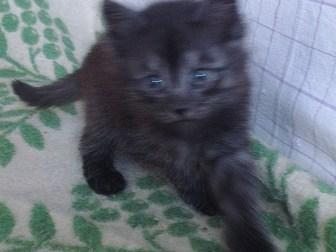 Скачать фотографию Отдам даром - приму в дар котята 38847547 в Омске