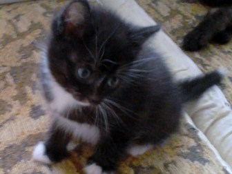 Скачать foto Отдам даром - приму в дар котята 38847547 в Омске